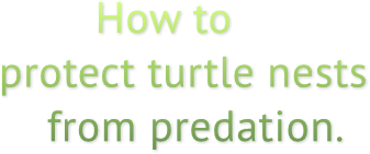 How to protect turtle nests     from predation.